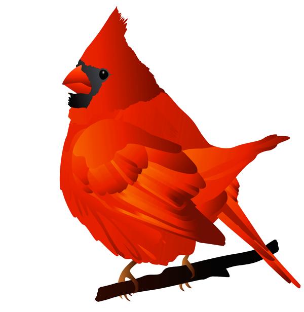 Brds clipart cardinal Clipart bird Clipartix Pictures collection