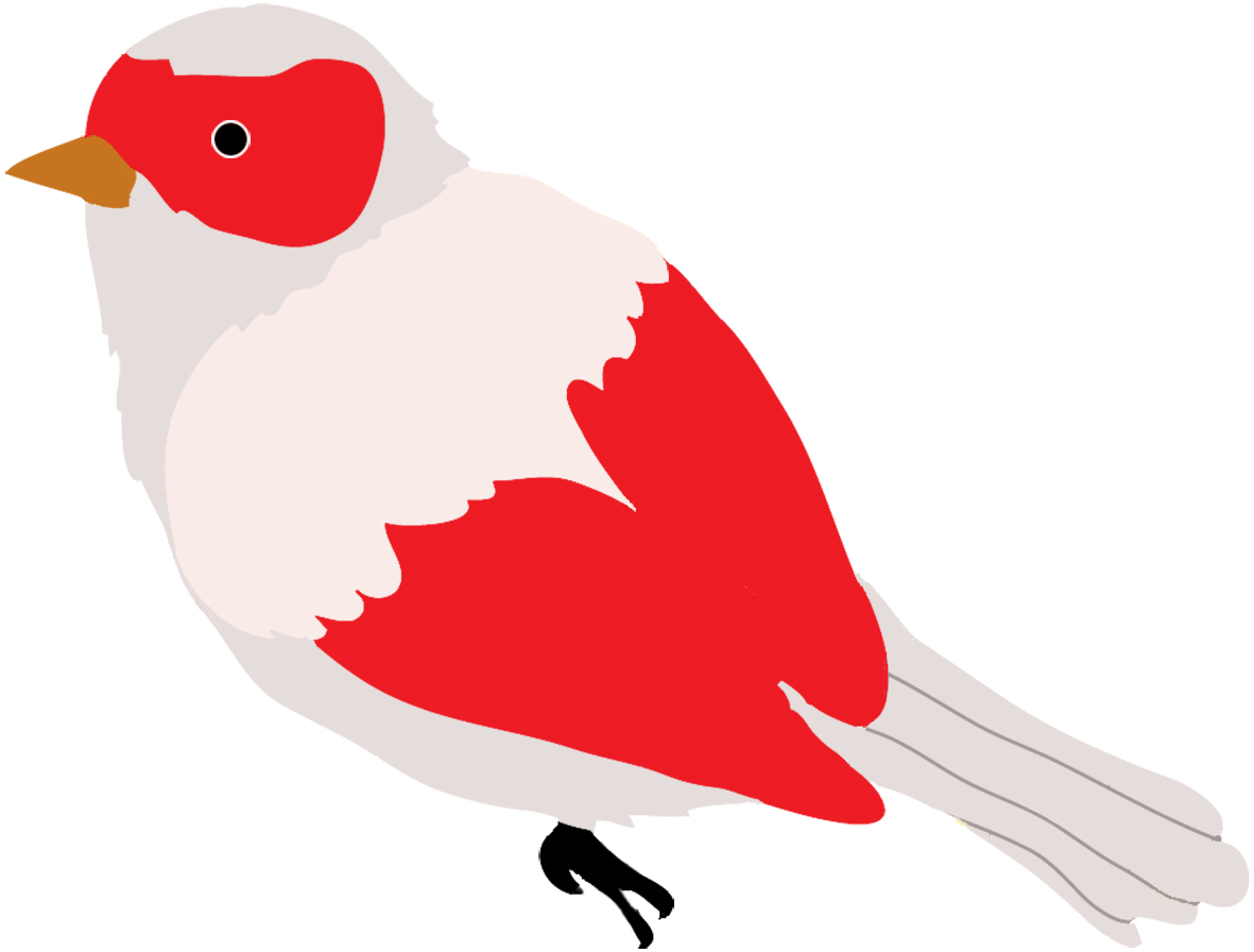 Bird clipart colored  of Drawings Colorful art