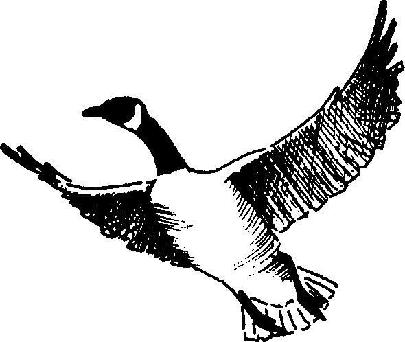 Brds clipart goose ClipartAndScrap art clipart Goose black