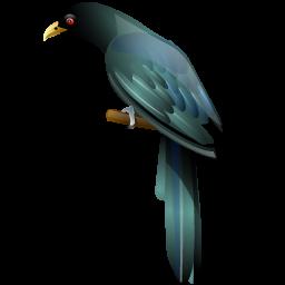 Brds clipart koyal Icons Iconshock Koel_bird koel_bird_icon