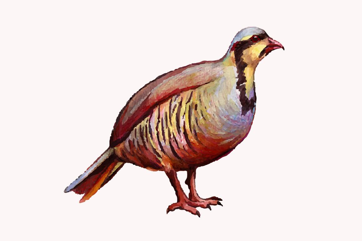 Bird clipart partridge Mete vector watercolor by bird