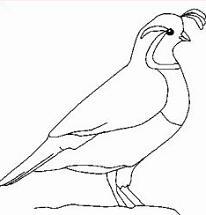 Bird clipart partridge Clipart Free Partridge Partridge pheasants
