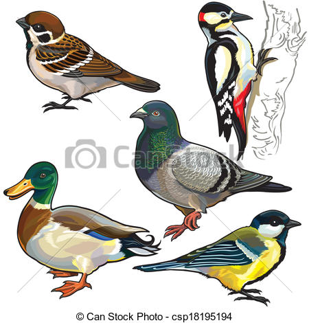 Bird clipart side view Wild Europe with  side