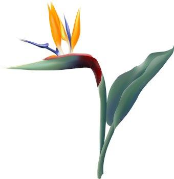Bird Of Paradise clipart #2