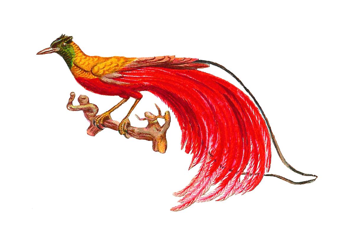 Bird Of Paradise clipart #8