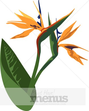 Bird Of Paradise clipart colorful bird Clipart of Clipart of Birds