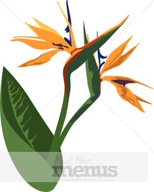 Bird Of Paradise clipart Caribbean Paradise Clipart Paradise Clipart