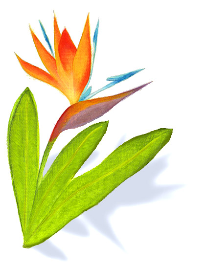 Bird Of Paradise clipart colorful bird On  Clip Art Paradise