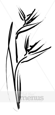 Bird Of Paradise clipart black and white Flower Sketch Clipart Caribbean Clipart