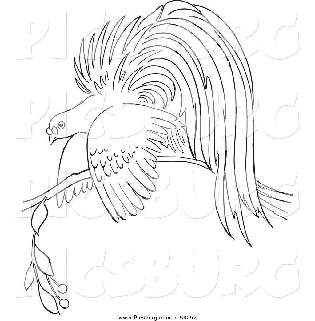 Bird Of Paradise clipart cartoon Cartoon Free Designs Royalty Art