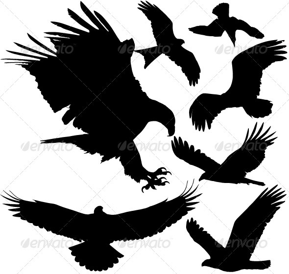 Bird Of Prey clipart silhouette Of Silhouettes Silhouettes Kites Prey