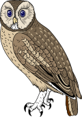 Bird Of Prey clipart soaring eagle Of Details $6 Tawny View