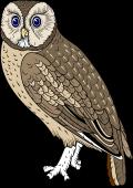 Bird Of Prey clipart vector Image: Birds of Coat $6
