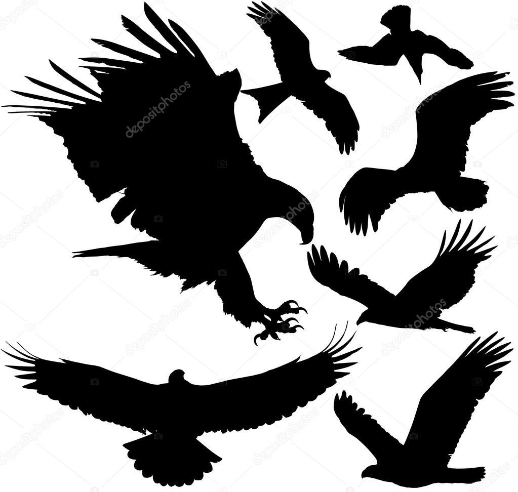 Bird Of Prey clipart white falcon By (eagle falcon griffon hawk