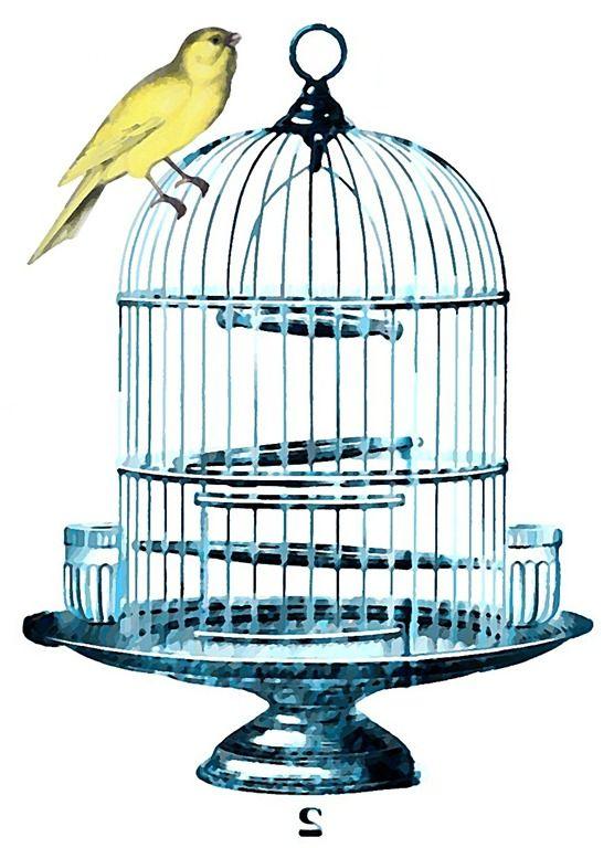 Birdcage clipart blue Birdcage birds Pinterest on Birdcages