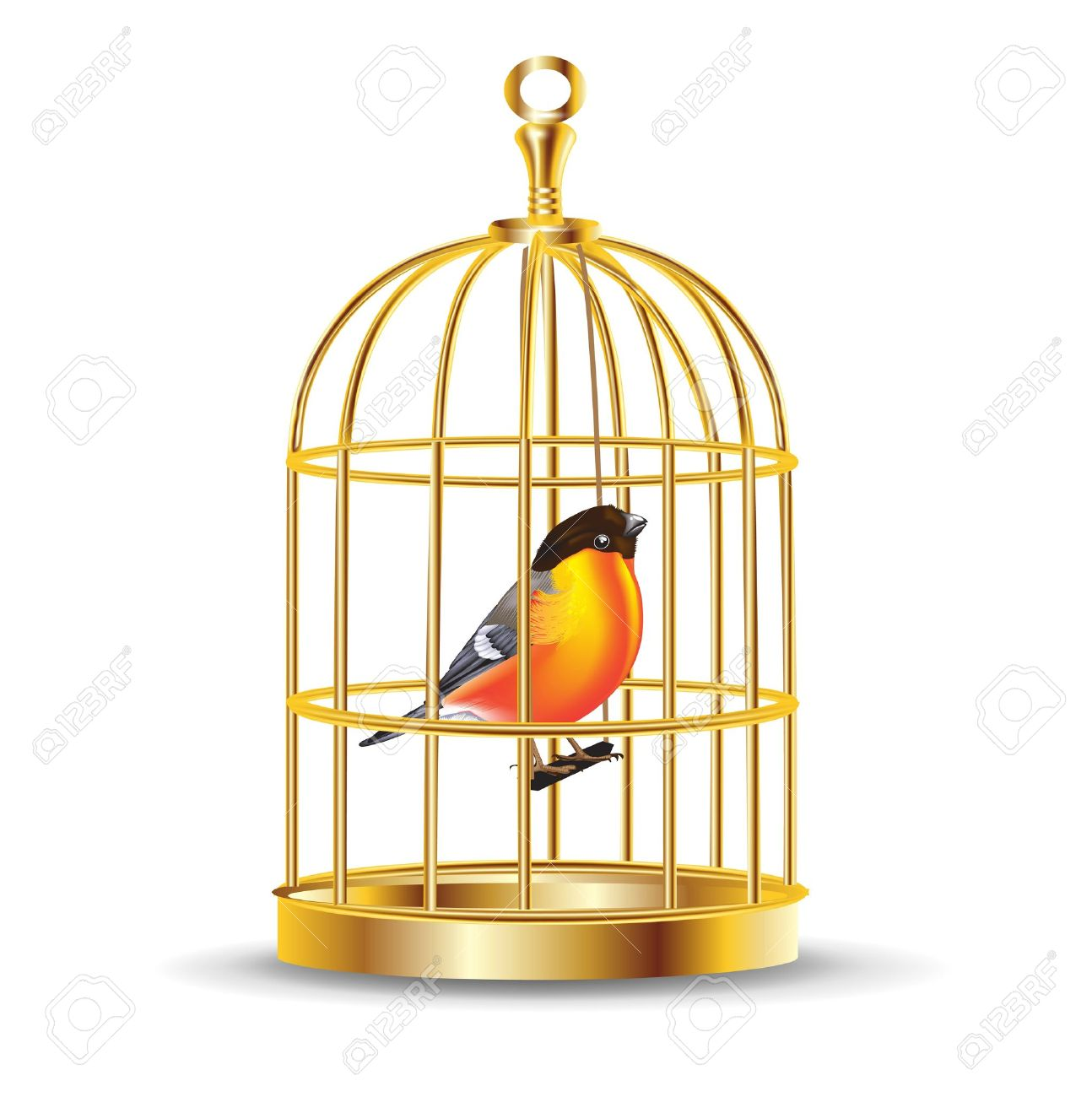 Parrot clipart cage Clipart clipart bird collection Caged