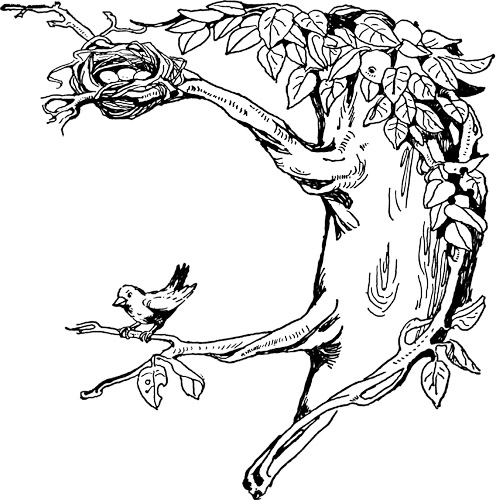 Nest clipart tree drawing Nest coloring downloads fashion Digital
