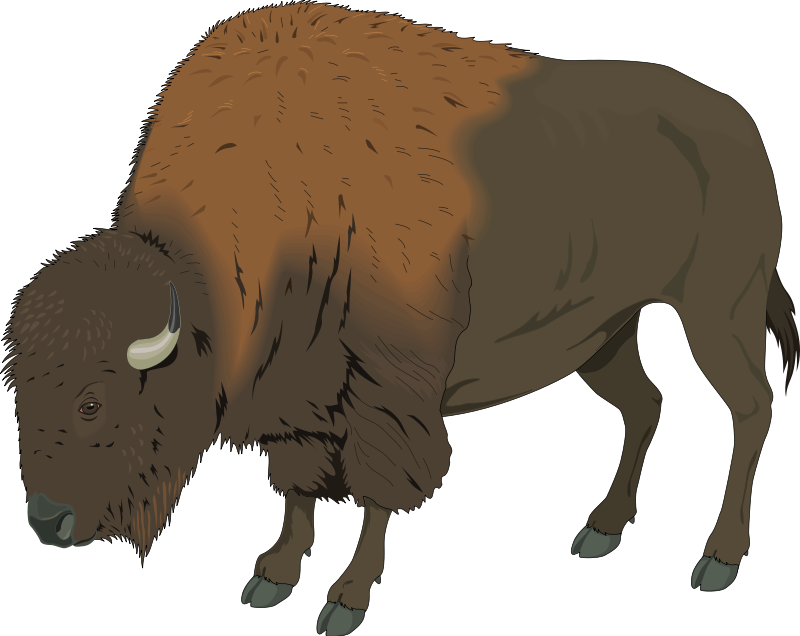 Bison clipart Images Clipart bison%20clipart Clipart Free