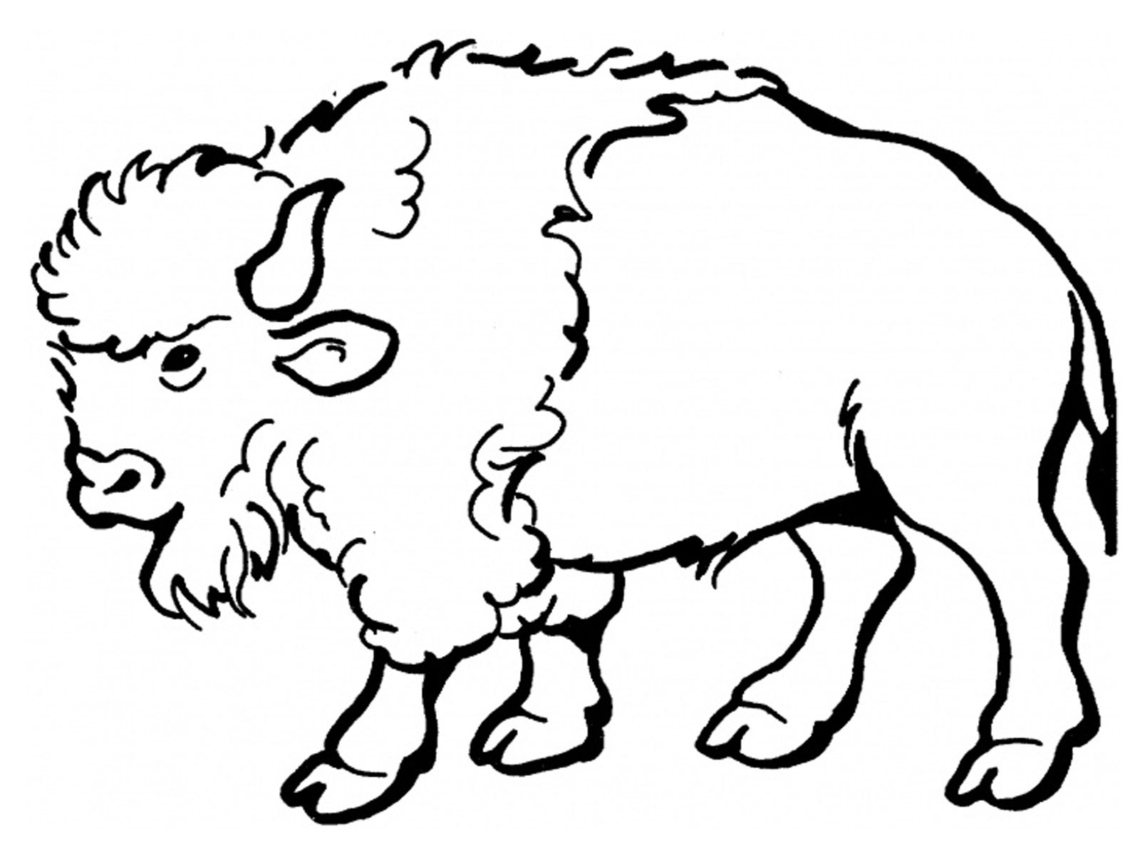 African Buffalo clipart coloring page Bison black white And Bison