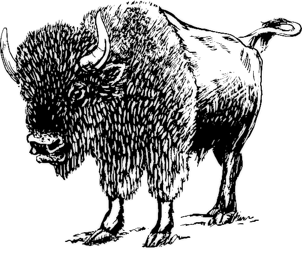 Bison clipart black and white Art page Public Domain Free