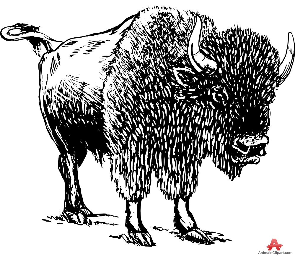 Bison clipart black and white Free Large View Bison Clipart