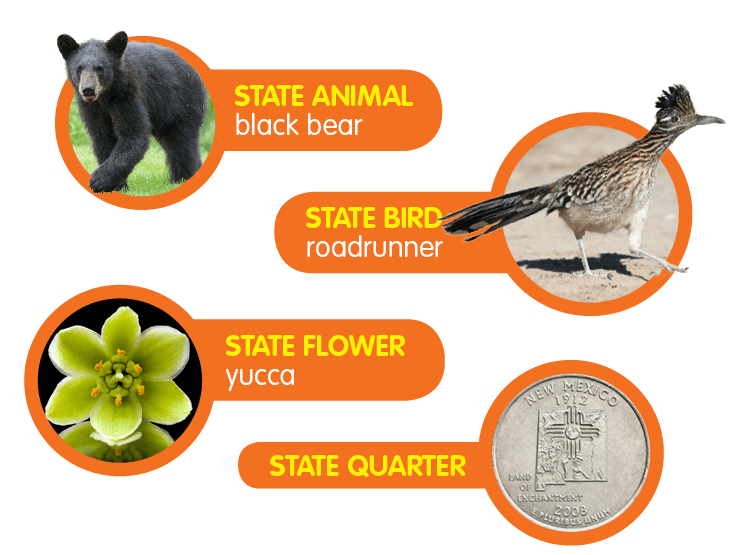 Black Bear clipart new mexico state State Flower: yucca; State Animal: