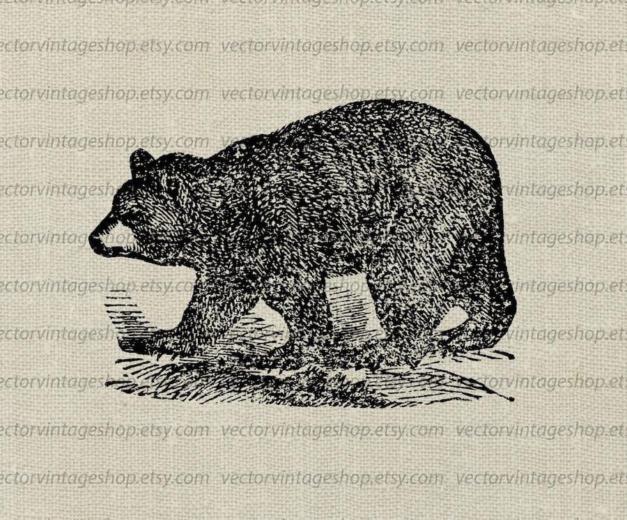 Black Bear clipart woodland Instant Wild Vector  Art