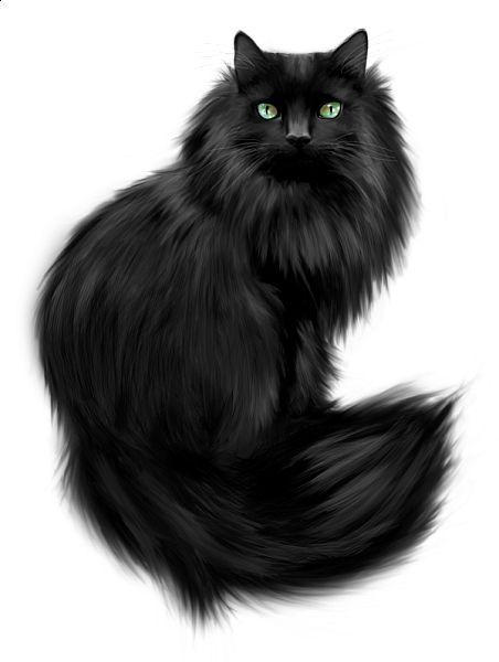 Black Cat clipart black animal Clipart  Best looks on