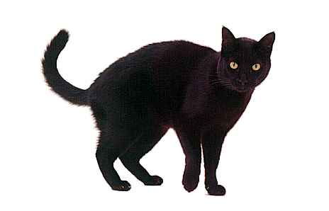 Black Cat clipart black object On Luck? Pet Clip Download