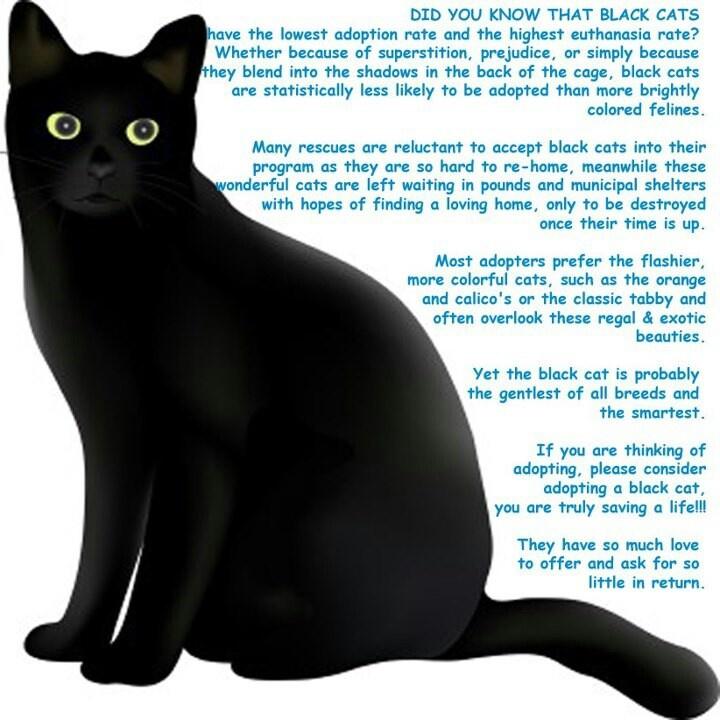 Black Cat clipart black object More best Pinterest Black Black