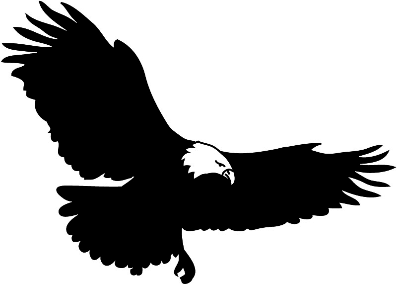 Black Eagle clipart bird prey Stock by dragon by black