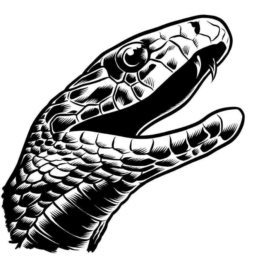 Drawn snake simple Mamba & Illustrations mamba Charles