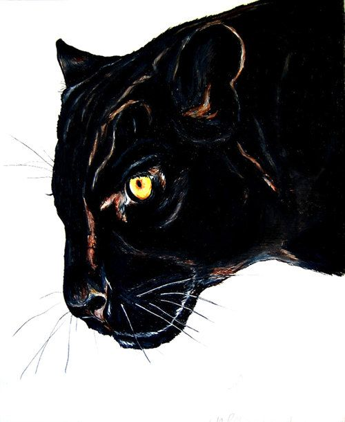 Black Panther clipart puma Panther Drawing panther ACEO Pinterest