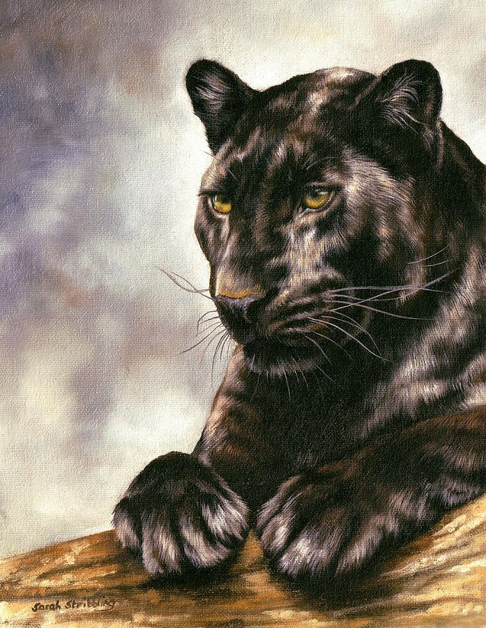 Drawn panther cat Panther ideas best  The