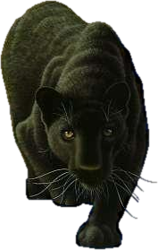Black Panther clipart transparent Clip Panther Art png Graphics