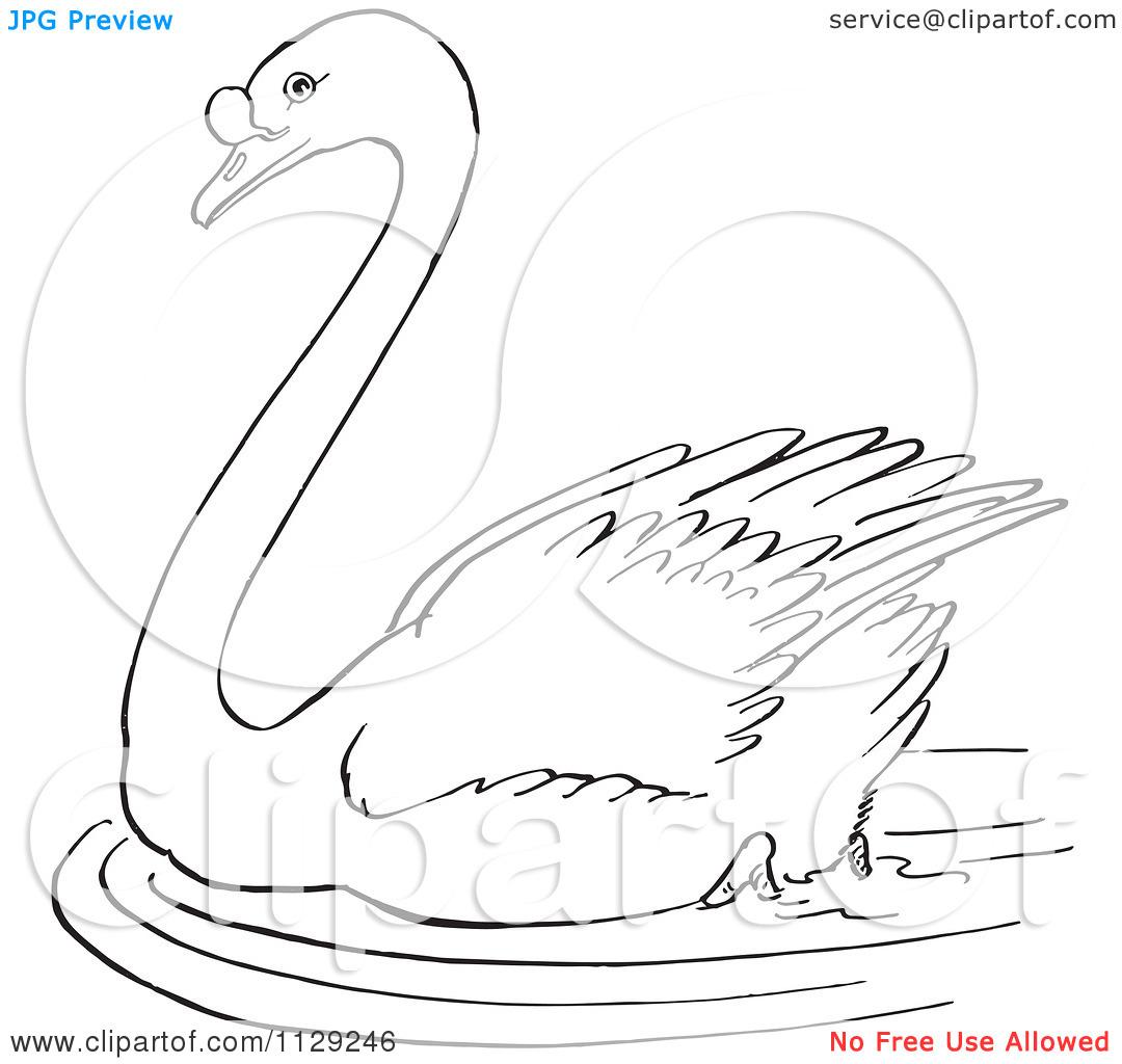 Black Swan clipart animal #64 clipart Fans swan black