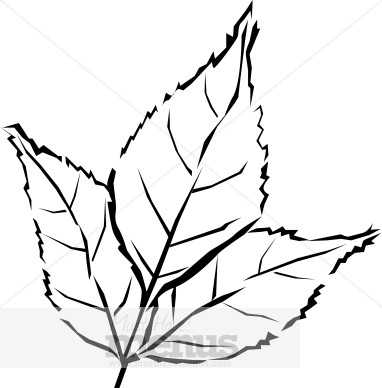 Black & White clipart leaf  Free And Leaves Clipart