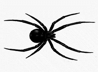 Black Widow clipart Free black Graphics black Clipart
