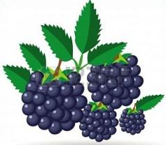 Blackberry clipart cell phone Clipart Blackberries Free Blackberries