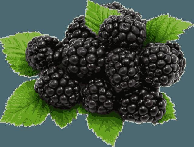 Blackberry clipart Art Dixie Blackberry Clip Blackberries