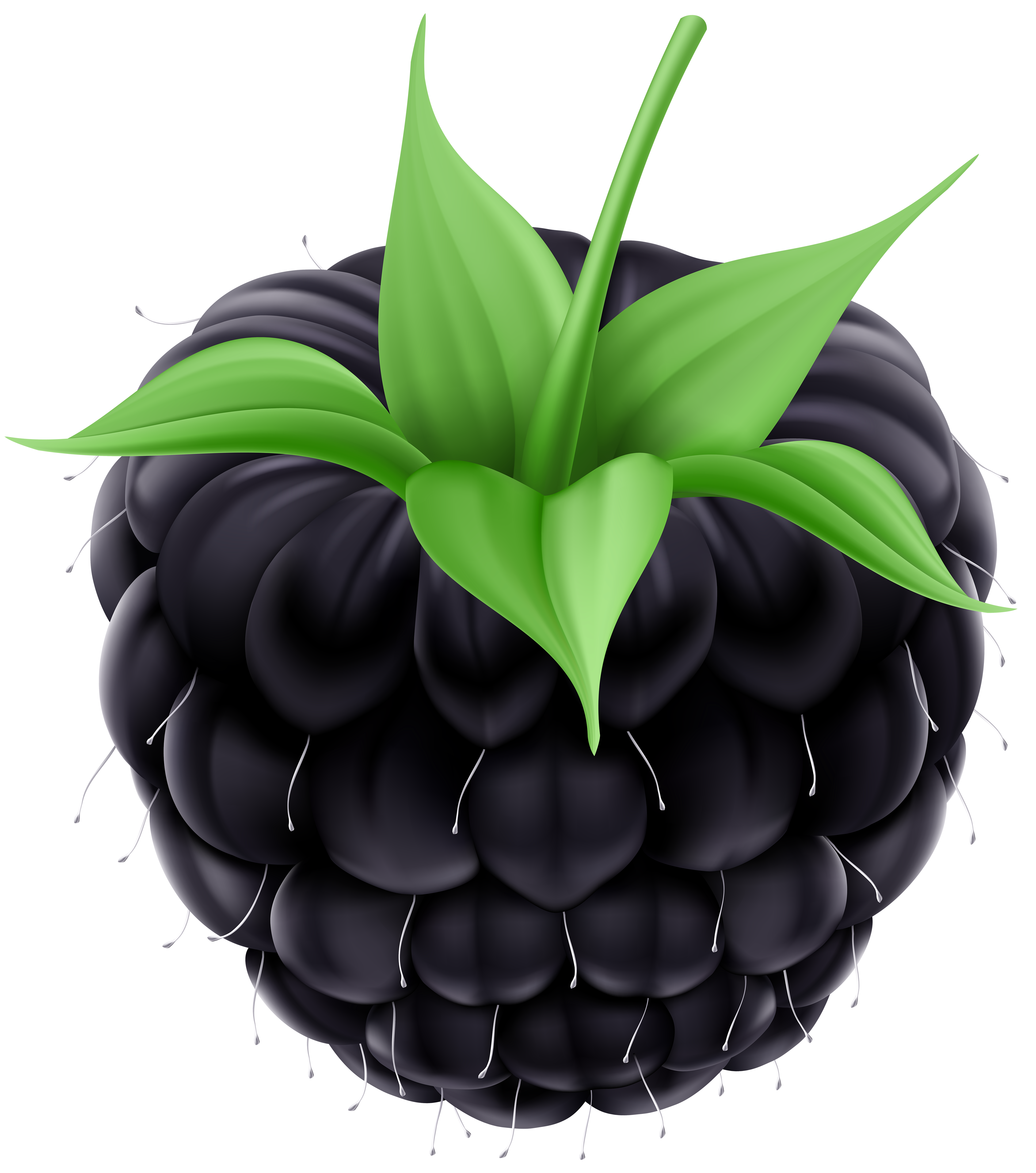 Blackberry clipart Full PNG  View Blackberry