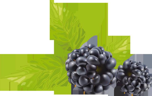 Raspberry clipart vector Art art png clip DownloadClipart