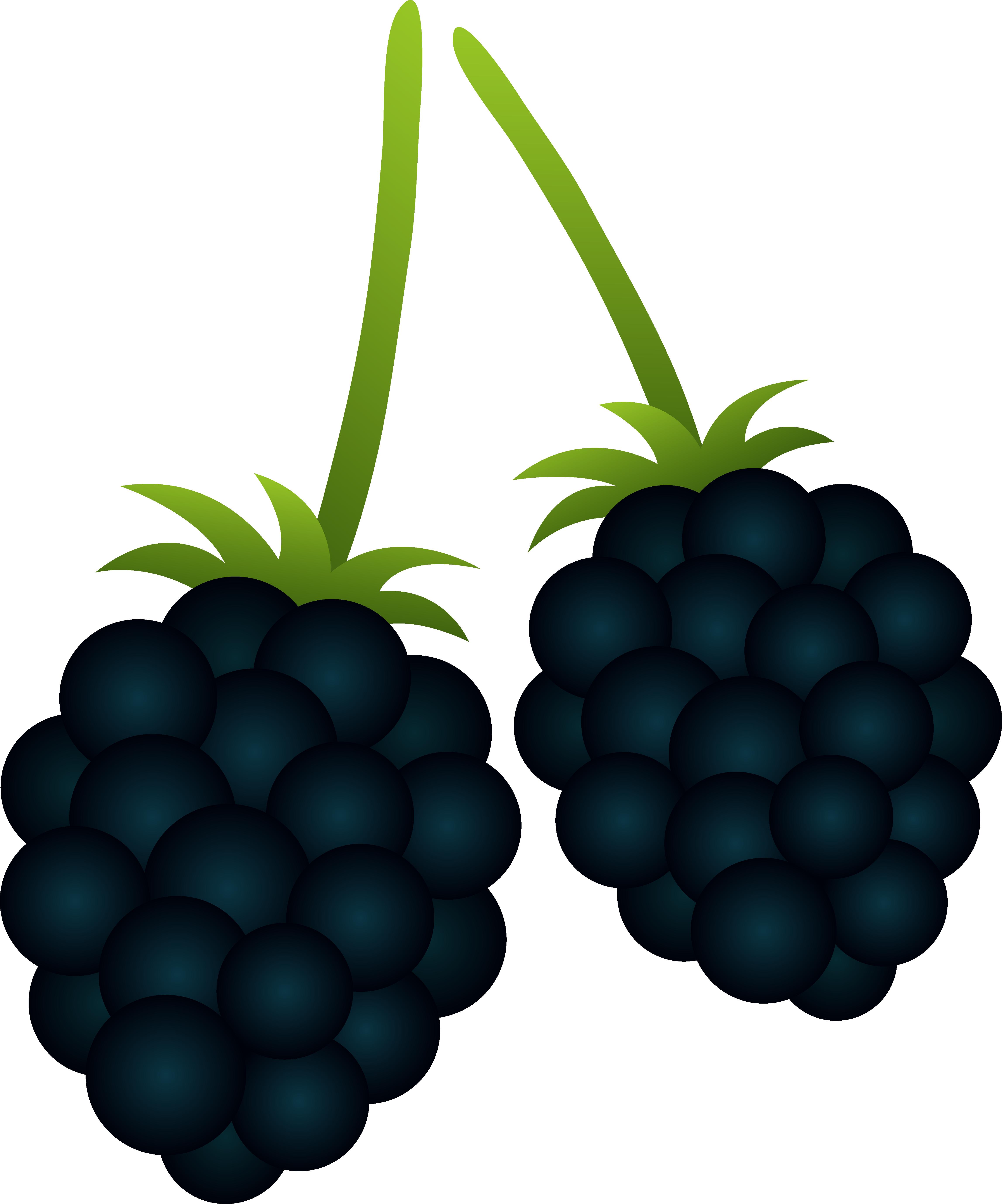 Blackberry clipart Clipart Blackberry cliparts Blackberry