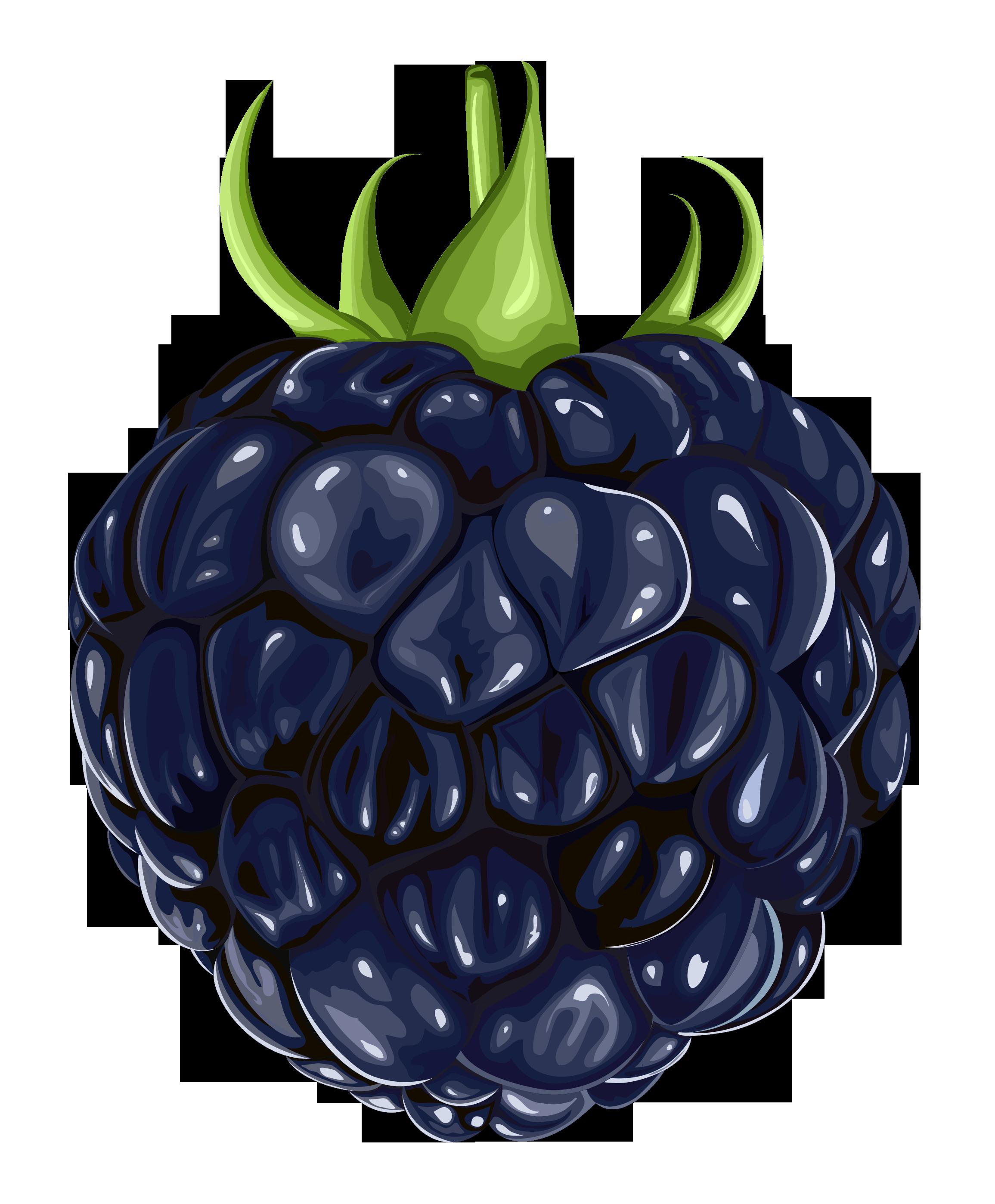 Blackberry clipart Free cliparts Blackberry Blackberry Clipart