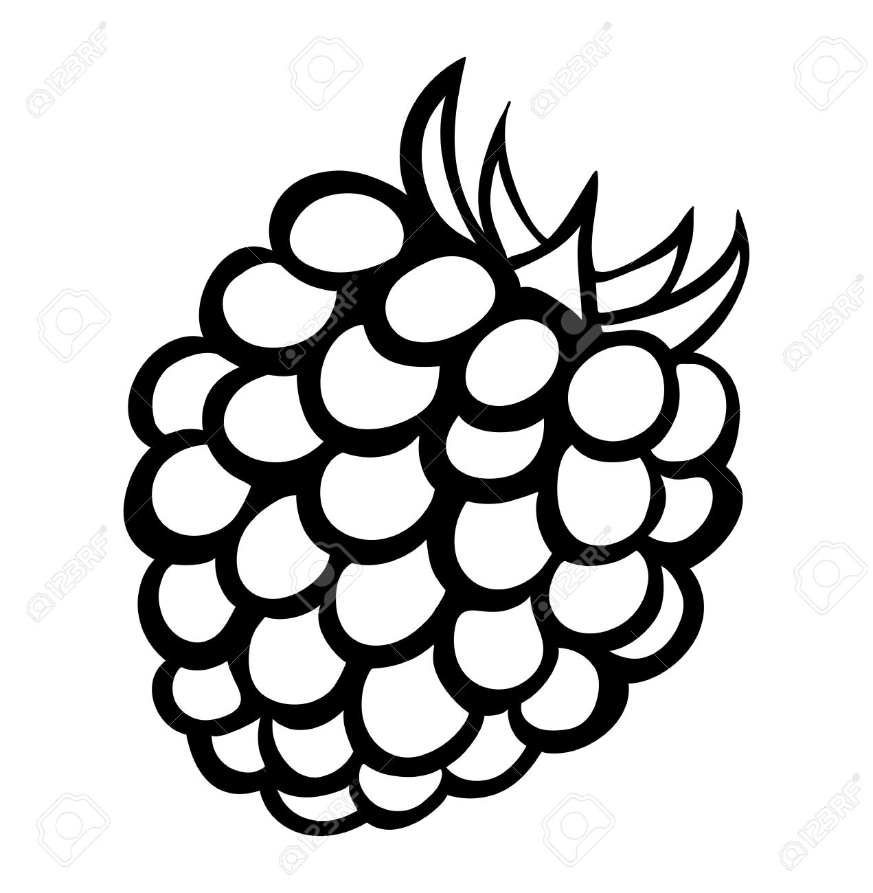 Raspberry clipart blackberry Blackberry white 6 Stock Blackberry