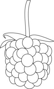 Raspberry clipart vector White Blackberry Outline and collection