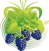 Blackberry clipart blackberry bush Mascot GoGraph Berries · Clip