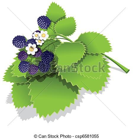 Bush clipart blackberry bush Vector illustration Vector of ripe