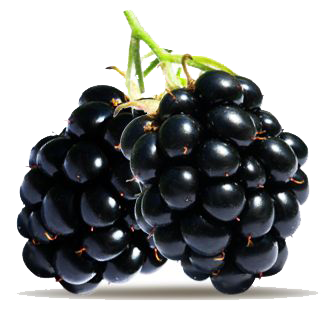 Blueberry clipart blackberry fruit Gallery PNG Transparent PNG Blackberry