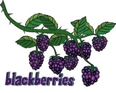 Blackberry clipart more Easy to and maps Create